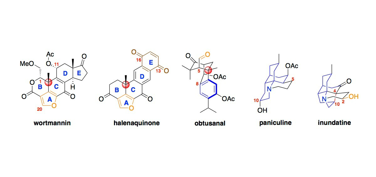 Terpenes and Alkaloids
